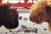 brown and white buffalo face each other metaphor for ethnic groups, avoid prejudice, love neighbors